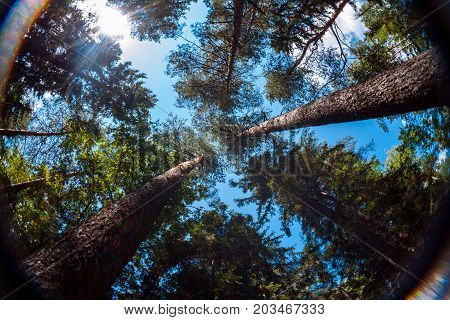 View of summer sky through trees crowns