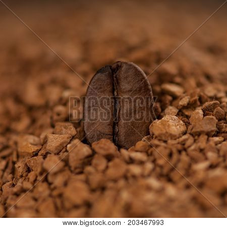 one coffee bean close up in granulated coffee