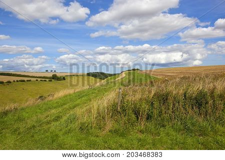 a scenic green valley in summer with grazing livestock woodland and wildflowers in the yorkshire wolds under a blue sky with white cloud
