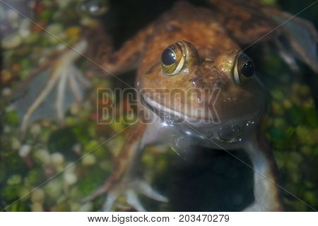 brown frog wildlife aquatic animal water amphibian