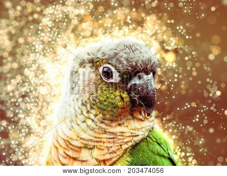 Portrait of beautiful colorful parrot with shimmering background. Bird scene. Beauty photo filter.