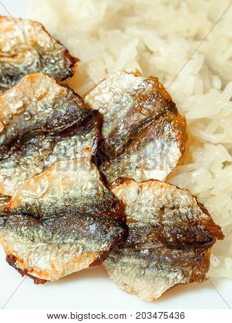 Sticky Rice And Fried Sun-dried Fish