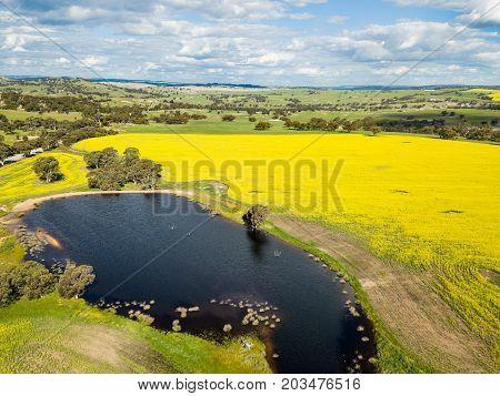 Aerial photograph of Canola fields and waterhole in York, Western Australia, Australia.