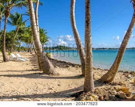 Coconut palms, turquoise sea, white beach and two chairs by the beach shore. Sainte-Anne Guadeloupe, Antilles, Caribbean.