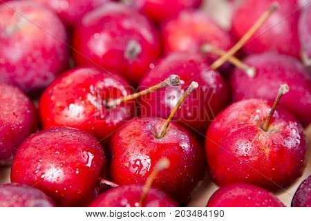 background of red apples red Ranetok clouse up