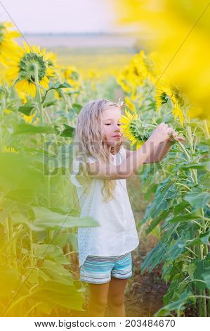 Beautiful little girl admiring the flower in a field of sunflowers
