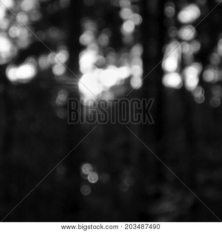 Dramatic Monochromatic Illustraton Of Last Light In Pine Forest  In Machuv Kraj Tourist Area During