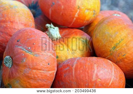Ambercup squash in a pile at an outdoor market.