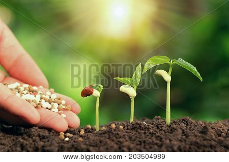 Agricultural hand nurturing fertilizer plant growing step on soil in garden