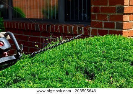 Gardener Decorative Trimming Of Trees