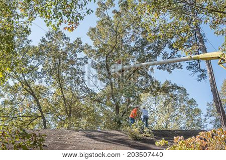 Bruce, MS USA - November 1 2017- Tree trimmers take their positions on the roof to assist the bucket operator in safely lowering cut limbs to the roof. After the limbs are lowered on the roof they will cut the limbs into smaller pieces and then remove the