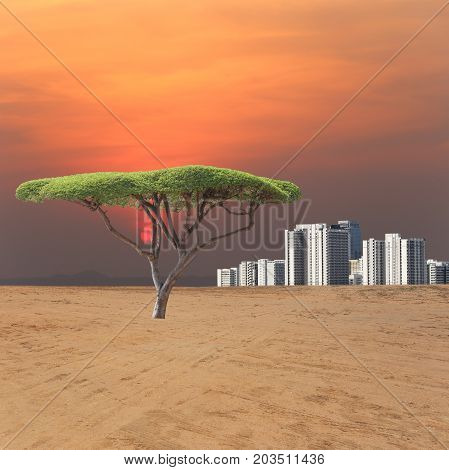 Fresh green trees in arid areas and view city of sunset for design in environmental concept.