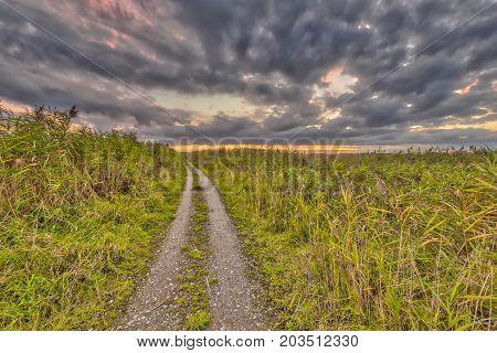 Track Through Marshland Nature Reserve