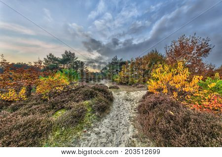 Autumnal Heathland Trail