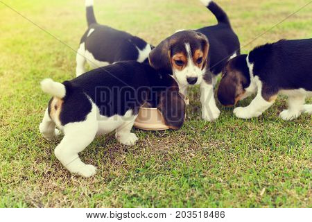 Dog, beagle, animal, canine, field, friendship, happiness, pets, playing, puppy, hound, hunter, hunting, baby, purebred dog, cute, doggy, young animal, dog beagle, garden, outdoor