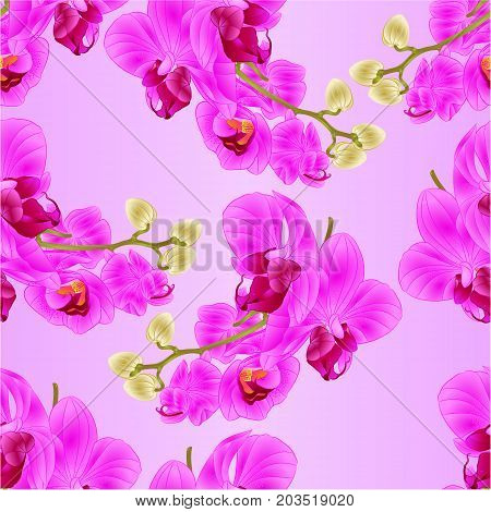 Seamless texture stem with flowers and buds beautiful Orchid purple Phalaenopsis closeup vintage vector editable illustration hand draw