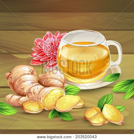 Glass cup of ginger tea with raw sliced on pieces ginger root, leaves, flower lying on wooden table hand-drawn vector illustration. Fresh brewed aromatic herbal beverage with oriental spicy additive