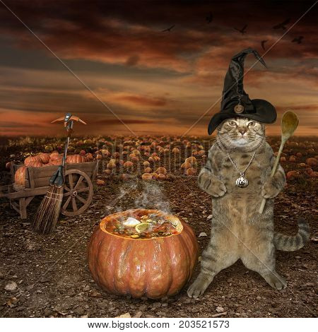 The cat in the witch cap is cooking a magical potion. It's Halloween.