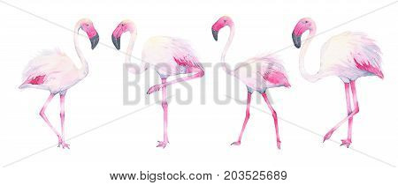 Watercolor hand painted tropical pink flamingo isolated on white background. Fauna bird animal illustration