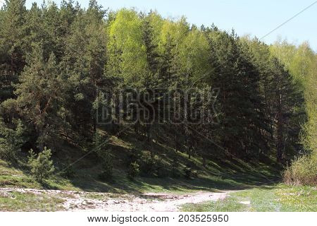 margin of a mixed forest. Trees growing on a steep