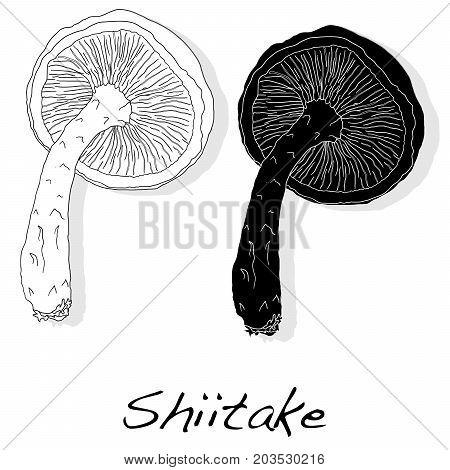 Shiitake eatable mushroom illustration isolated set .