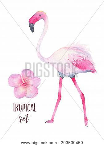 Watercolor hand painted tropical pink flamingo and frangipani flower isolated on white background. Fauna bird animal illustration