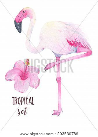 Watercolor hand painted tropical pink flamingo and hibiscus flower isolated on white background. Fauna bird animal illustration