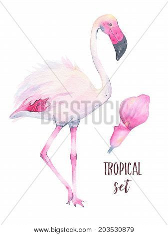 Watercolor hand painted tropical pink flamingo and calla lily flower isolated on white background. Fauna bird animal illustration