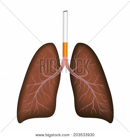 smoker : a cigarette destroy lung on white background