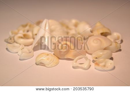 Seashells on a white background, Seashell, Seashells