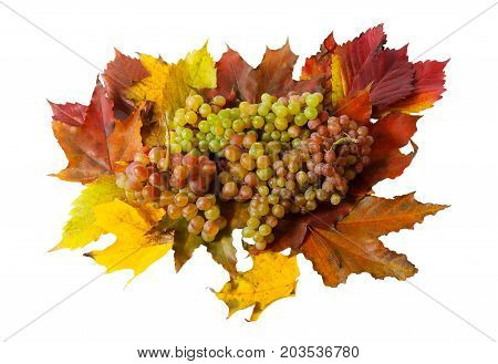 Grape and autumn leaves isolated on white background