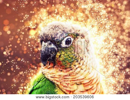 Portrait of beautiful colorful parrot with shimmering background. Bird scene. Beauty in nature.