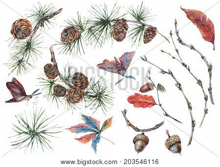 Watercolor forest collection with sprig of fir  trees, pine cones, acorns, autumn leaves and moths. Natural vintage watercolor set isolated on white  background