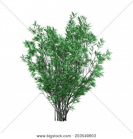 3d3D rendering of a green oleander bush with flowers isolated on white background