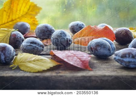 prunes on a wooden background with yellow red autumn leavesplacer placer