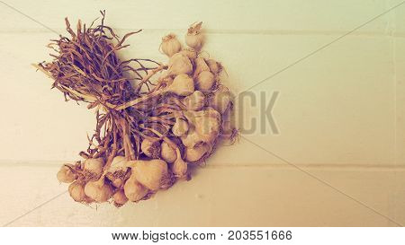Background garlic dry on white wood Photo vintage art warm tone color.