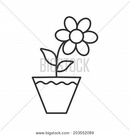 Crocus flower in flowerpot linear icon. Indoor decorative plant thin line illustration. Blooming flower contour symbol. Vector isolated outline drawing