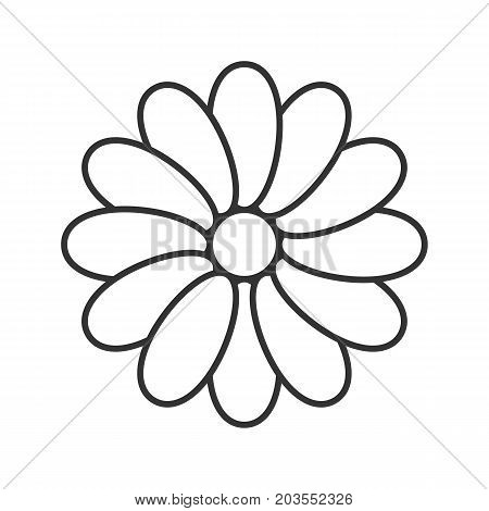 Chamomile head linear icon. Treatment plant thin line illustration. Blooming flower contour symbol. Vector isolated outline drawing