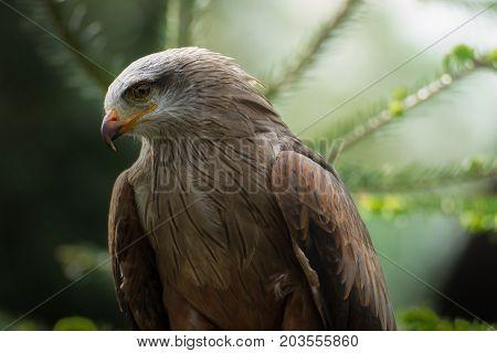 Profile predator of bird in nature in wild
