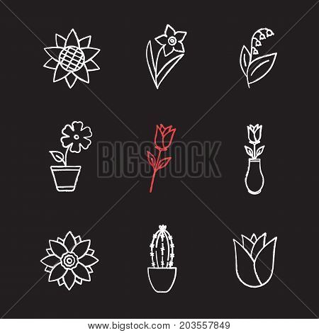 Flowers chalk icons set. Sunflower head, daffodil, may-lily, hibiscus, roses, lotus, cactus, rosebud. Isolated vector chalkboard illustrations