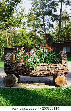 Outdoor landscape design - garden bed with flowers. Original flowerbed in wooden log, formal garden