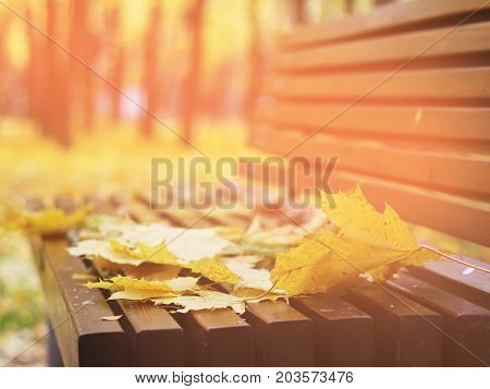 autumn leaves on a bench in the woods Red and Orange Autumn Leaves Background