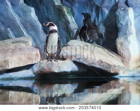Penguins On A Rock, Penguins At The Zoo, Indoors, Behind Glass.
