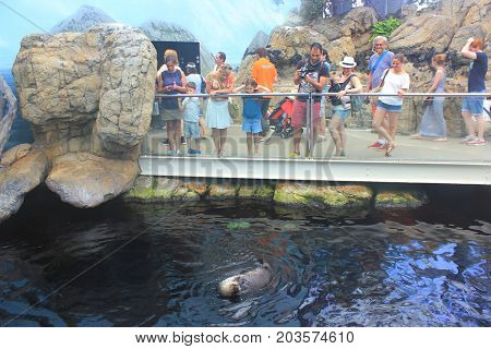 LISBON, PORTUGAL - JUNE 7, 2017: People watching and taking pictures of otter swimming in Zoo Park water. Popular family time activity, many animals, wildlife, sea and marine life in local oceanarium.