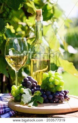 Bunch of fresh grapes next to white wine in a bottle and wineglass on the background of a rustic vineyard and sunlight.