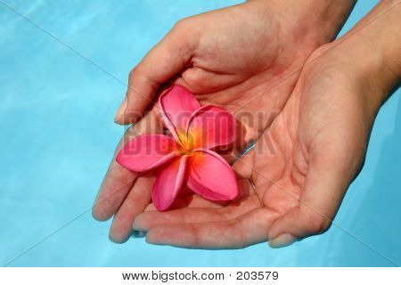 Flower And Hands