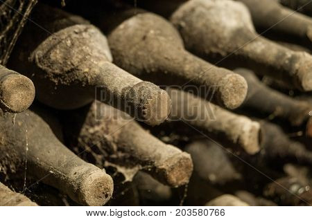 lot of old wine bottles in the web in the wine cellar close-up