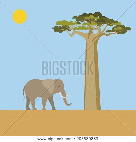 African Nature scene. Abstract landscape with elephant and baobab. Africa theme flat vector illustration.