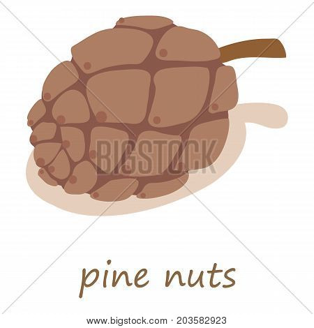 Pine nuts icon. Isometric illustration of pine nuts vector icon for web