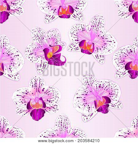 Seamless texture beautiful purple and white Orchid Phalaenopsis flower vintage closeup vector illustration editable hand draw